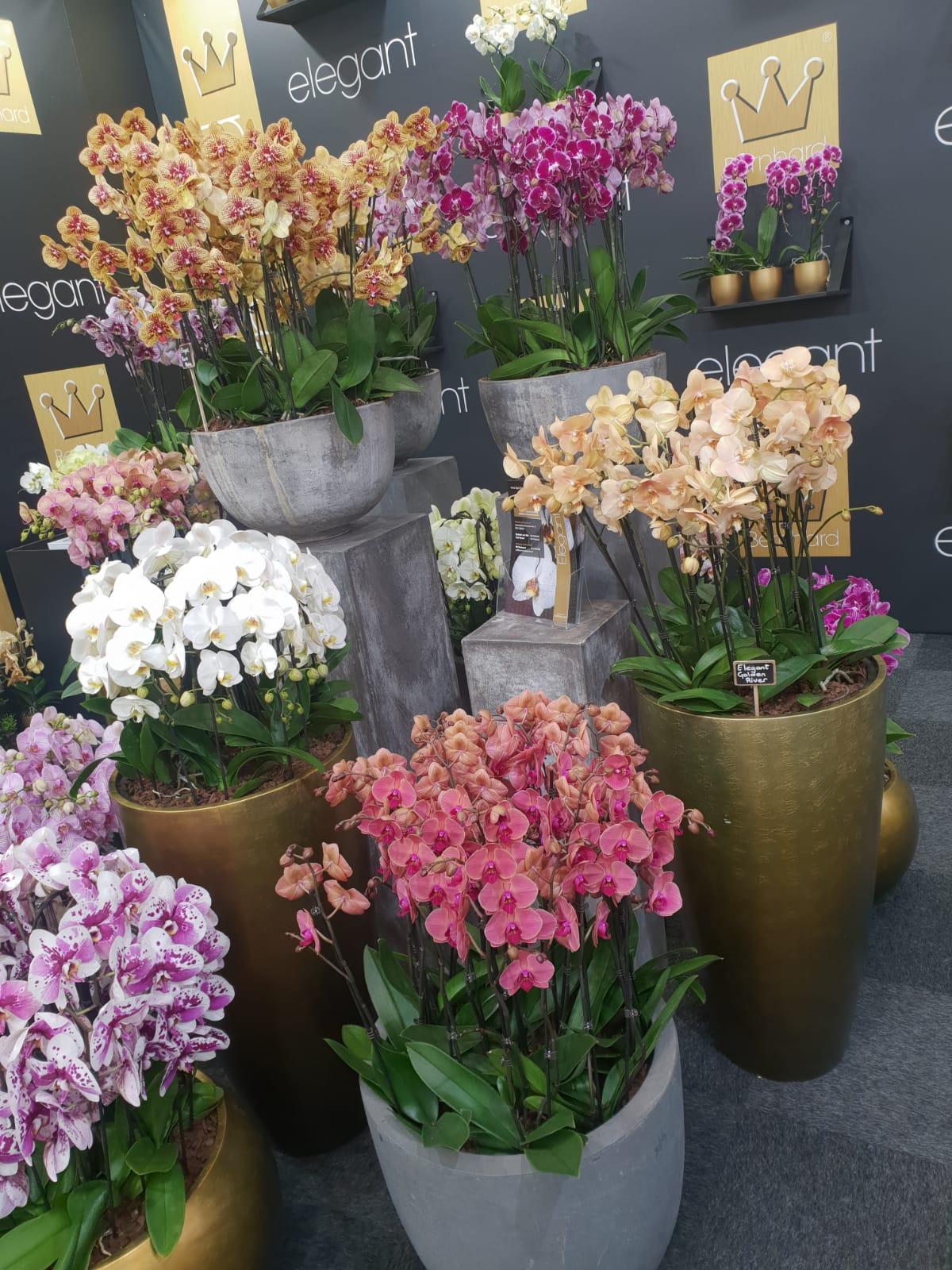 Klassenfahrt der Gärtner*innen und Florist*innen zur IPM 2020 in Essen